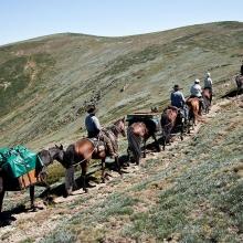 bogong-horse-rides_3-jpeg_0