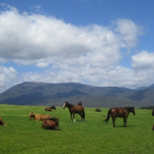 bogong-horse-rides_5-jpeg_0